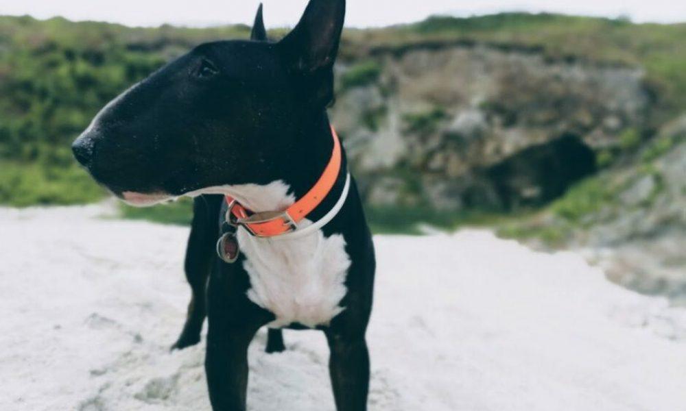 Pottschnauzen Hundetraining